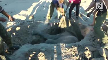 Turis berusaha menyelamatkan seekor bayi gajah yang terjebak dalam lubang tapi berakhir tragis