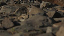 Warga berjalan di bibir pantai saat sore hari di Pantai Marunda, Teluk Jakarta, Selasa (11/9). Pantai Marunda menjadi tempat alternatif berlibur keluarga dan menghibur diri dengan memancing di bibir pantai tersebut. (Merdeka.com/Imam Buhori)