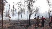 Petugas BBKSDA Riau dan Manggala Agni memadamkan kebakaran lahan di Cagar Biosfer. (Liputan6.com/M Syukur)