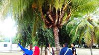 Salah satu keanehan pohon kelapa itu adalah usianya yang mencapai sembilan tahun meski sempat hampir mati. (Liputan6.com/Aldiansyah Mochammad Fachrurrozy)