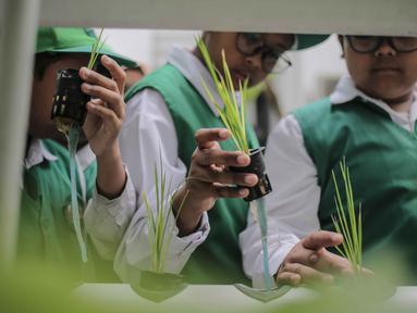 Sejumlah murid SD Laboratorium Jakarta melihat tanaman hidroponik di Balaikota Farm, Jakarta, Selasa (15/10/2019). Kegiatan belajar di luar ruangan ini untuk mengenal bibit, cara menanam, nutrisi dan media tanam hidroponik. (Liputan6.com/Faizal Fanani)