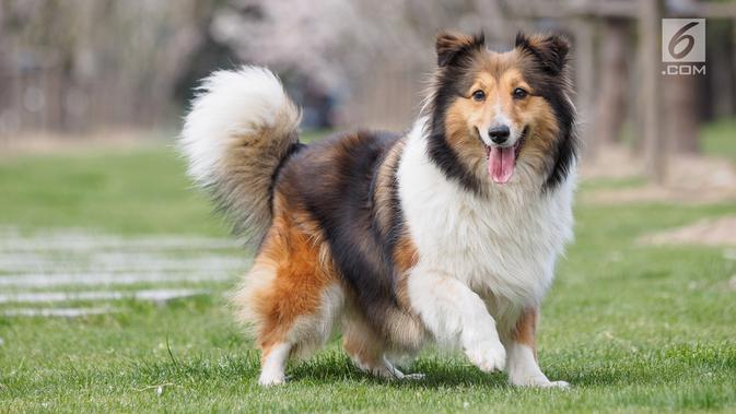 Jenis Makanan yang Bikin Anjing Kena Gangguan Jantung