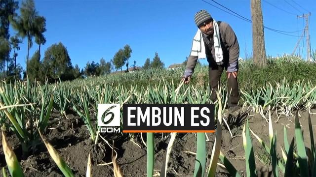 Embun es merusak lahan tanaman warga di Probolinggo. Tanaman rusak akibat kandungan belerang di dalam embun.