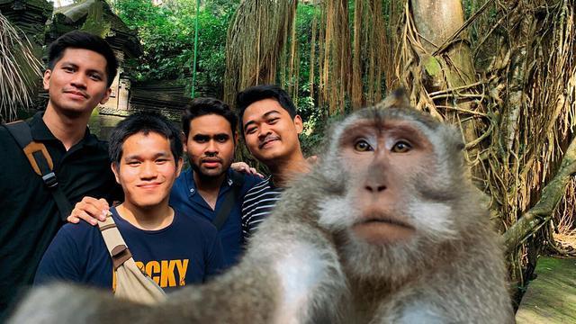 Terkuak Ternyata Begini Trik Foto Selfie Monyet Bareng