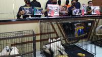 Polisi menangkap penjual satwa dilindungi secara online.  (Dian Kurniawan/Liputan6/com)