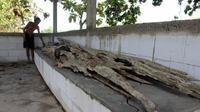 Seorang warga melihat-lihat kondisi kayu tua yang diyakini sebagai perahu atau gethek Jaka Tingkir di Punden Domba di Dukuh Butuh, Desa Karangudi, Ngrampal, Sragen, Jumat (16/10/2020). (Solopos/Tri Rahayu)