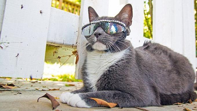 Download 64+  Gambar Kucing Pakai Kacamata Lucu Paling Baru Gratis