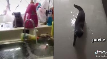 Viral, Aksi Usil Kucing Nyalakan Keran Wastafel hingga Rumah Banjir