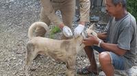 Anjing Gila Serang Orang di Kolaka Utara (Liputan6.com/Ahmad Akbar Fua)