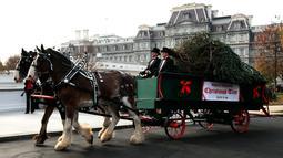 Kereta kuda membawa pohon Natal yang didatangkan langsung dari Newland, North Carolina untuk diberikan kepada Presiden AS, Donald Trump dan First Lady Melania Trump di Gedung Putih, Washington, Senin (19/11). (AP/Manuel Balce Ceneta)