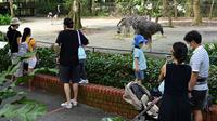 Pengunjung melihat binatang di kandang mereka pada hari pertama pembukaan Kebun Binatang Singapura untuk umum di Singapura, Senin (6/7/2020). Kebun binatang yang hampir tiga bulan ditutup akibat pandemi virus corona ini dibuka kembali dengan penerapan protokol kesehatan. (Roslan RAHMAN/AFP)