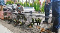 Burung petet sitaan Polda Riau dari seorang pegawai negeri sipil Pemprov Riau. (Liputan6.com/M Syukur)