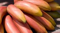 Ilustrasi pisang merah (sumber: Pixabay)