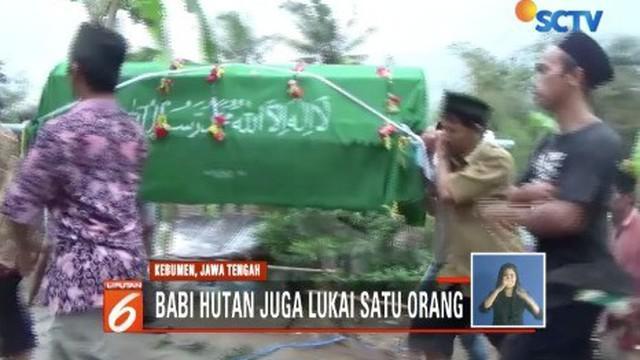 Seekor babi hutan di Kebumen, Jawa Tengah, mengamuk dan menyerang warga. Dua orang warga menjadi korban, satu di antaranya meninggal dunia.