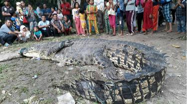 BBKSDA Riau Usut Kematian Buaya Raksasa Setelah Ditangkap Warga