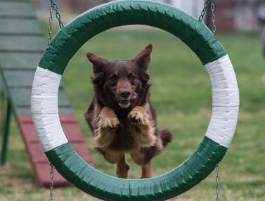 Pusat Pelatihan Anjing Polisi di Chile