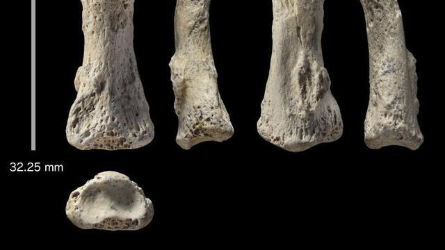Temuan Fosil Tulang Jari Di Arab Saudi Ungkap Petunjuk Baru Tentang Manusia Purba Pertama Global Liputan6 Com