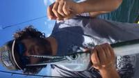 Jenis ikan houndfish (YouTube)