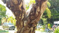 Pohon tua yang disulap jadi karya seni indah (Arfandi Ibrahim/Liputan6.com)