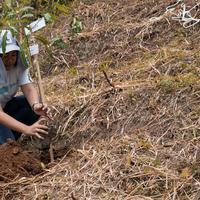 Menanam pohon untuk lingkungan. (Foto: Dok. Johnson's)