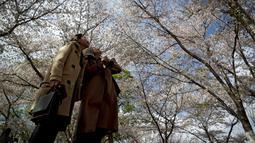 Pengunjung melihat bunga sakura selama festival musim semi di Taman Yuyuantan, Beijing, China, Sabtu (30/3). (AP Photo/Andy Wong)