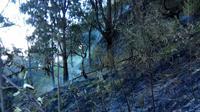 Kebakaran lahan hutan di kawasan Gunung Arjuno sudah menghanguskan lebih dari 70 hektar lahan (BPBD Kota Batu)