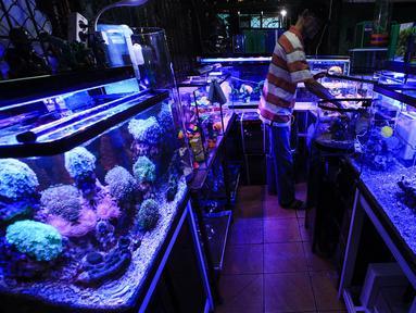 Suasana sepi pasar penjualan ikan hias di kawasan Sumenep, Menteng, Jakarta, Selasa (8/12/2020). BPS mencatat ekspor ikan hias Indonesia pada kuartal I 2020 anjlok 24,7 persen atau hanya US$6,41 juta yang membuat pedagang tetap bertahan di tengah hantaman pandemi COVID-19. (merdeka.com/Imam Buhori)