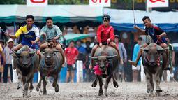 Sejumlah Joki saat bersaing pada festival lomba balap kerbau di Chonburi, Bangkok, Thailand  (16/7). Festival tahunan itu diikuti puluhan petani di Chonburi untuk merayakan panen padi. (AP Photo/Sakchai Lalit)