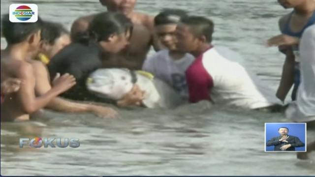 BKSDA Sumatra Utara berhasil evakuasi lumba-lumba yang tersesat di Sungai Kualuh, Labuan Batu.