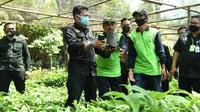 Menteri Pertanian, Syahrul Yasin Limpo saat meninjau pohon induk dan pembibitan alpukat pameling di Desa Wonorejo, Lawang, Kabupaten Malang (Kementan)