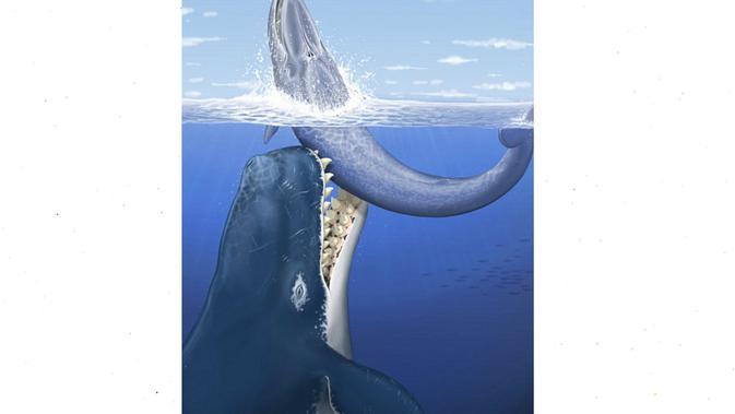 Ilustrasi Leviathan, paus sepanjang 18 meter yang pernah menghuni lautan (AP)