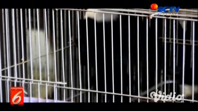 Badan Karantina Pertanian Kementerian Pertanian (BBKP) Surabaya berhasil menggagalkan penyelundupan 74 ekor burung berbagai jenis senilai Rp 1 miliar.