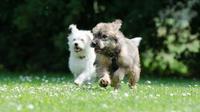 Ilustrasi anjing berlari (pixabay)