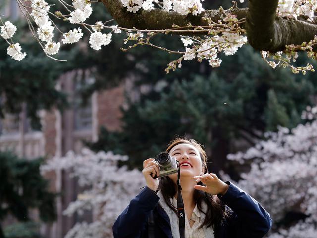 Masa Hidup Singkat Hingga Bisa Dimakan 15 Fakta Menarik Bunga Sakura Nan Indah Global Liputan6 Com