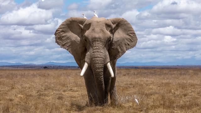 Ilustrasi gajah (Dok.Unsplash)