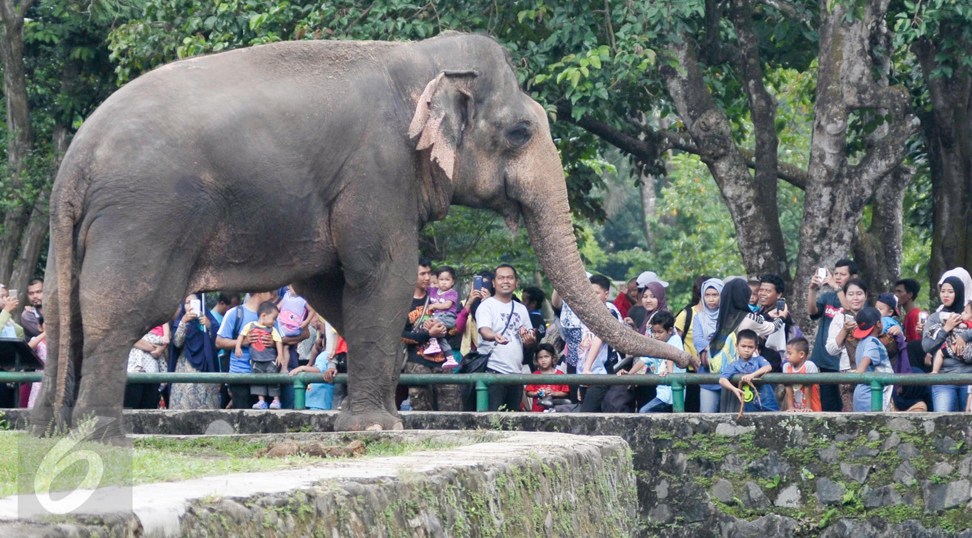 Kebun Binatang Ragunan di Antara 10 Konglomerat - News Liputan10.com