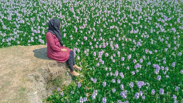 Danau Bunga Eceng Gondong Jadi Tempat Wisata Dadakan Di