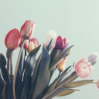 Ilustrasi bunga tulip | unsplash.com/@zeitschreiber