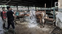 Pekerja membersihkan sapi yang akan disiapkan sebagai hewan kurban di RPH PD Dharma Jaya, Cakung, Jakarta, Kamis (30/7/2020). Seperti diketahui, Pemprov DKI Jakarta menjadikan RPH PD Dharma Jaya sebagai Sentra Qurban 2020 saat perayaan Idul Adha di tengah pandemi. (merdeka.com/Iqbal S. Nugroho)