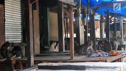 Monyet liar memakan sisa makanan diatas meja kios di pasar Ciampea Baru,Bogor Selasa (07/08). (Merdeka.com/Arie Basuki)