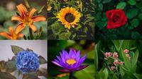 Pilih Bunga yang Paling Kamu Suka untuk Ungkap Kepribadian Unikmu (Saumber: Unsplash)