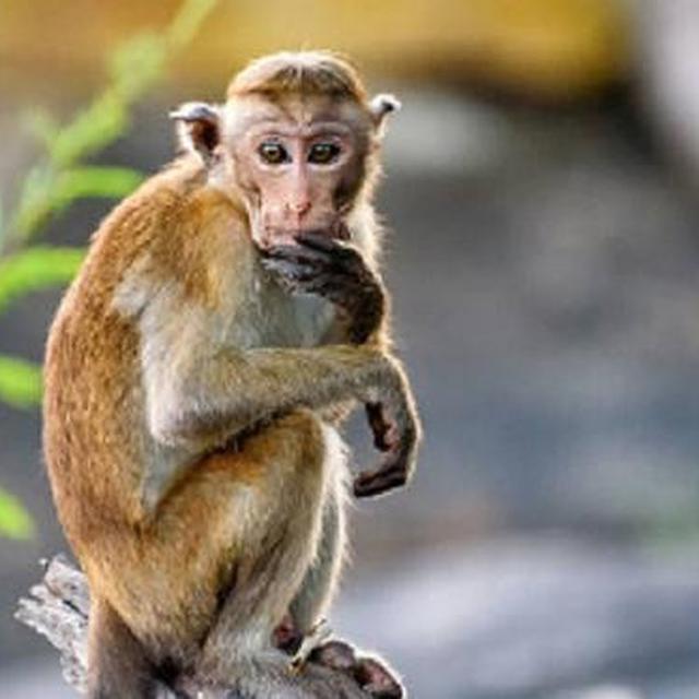 480+ Gambar Binatang Monyet Lucu Gratis