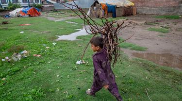 Bocah pengembara Kashmir Bakarwal membawa kayu bakar dari ladang terdekat di luar kamp sementara di pinggiran Srinagar, India, 31 Agustus 2020.  Suku Bakarwals adalah kaum penggembala nomaden di Jammu Kashmir, yang mengembara mencari padang rumput yang baik untuk ternak mereka. (AP Photo/Dar Yasin)