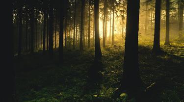 Wisata Alam di Magetan yang Populer