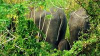 Kawanan Gajah Sumatera yang pernah terpotret oleh petugas BBKSDA Riau. (Liputan6.com/Dok BBKSDA Riau/M Syukur)/