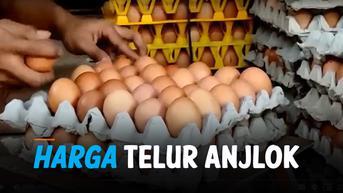 VIDEO: Harga Terus Anjlok, Peternak Simpan Telur