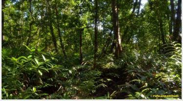 Kawasan Hutan Mangrove di Taman Nasional Sembilang, Musi Banyuasin, Sumatera Selatan