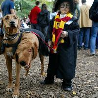 5 Kostum Halloween Unik untuk Anjing   foto : boredpanda.com