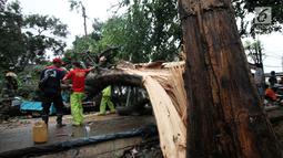 Petugas bersama unsur masyarakat  berupaya melakukan proses pemotongan pohon besar yang tumbang akibat Hujan dan Angin di wilayah Serua, Ciputat, Rabu (12/12). sejumlah ruas wiliyah Tangsel mengalami kemacetan yang cukup parah. (merdeka.com/ arie basuki)