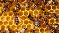 Lebah Menghasilkan Cairan Menyerupai Sirup. Dari Mana Asalnya? (Sumber Foto: raspberrypi.com)